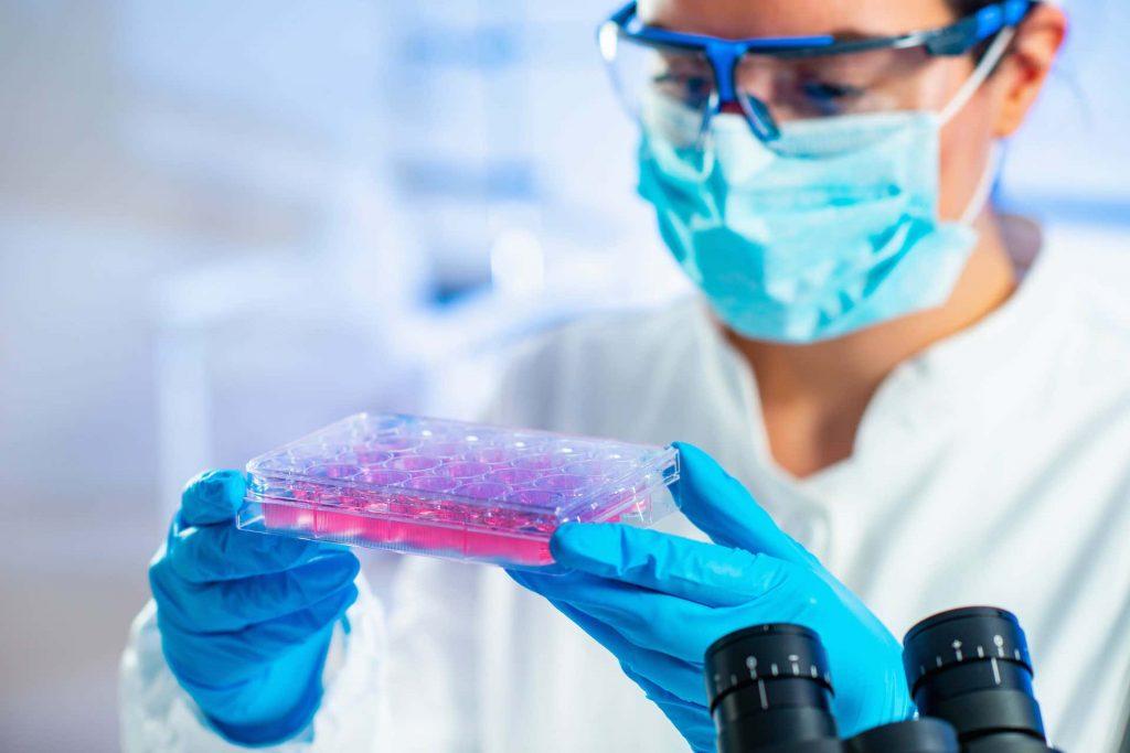 Doctor examining stem cells.
